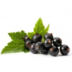Blackcurrant 30ml ZERO