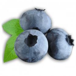 Blueberry 10ml ZERO