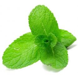 Fresh Mint 30ml