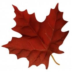 Canadian 30ml